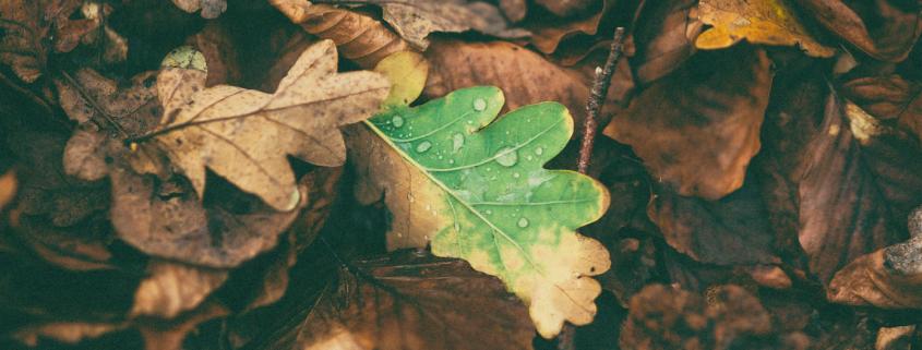 Herbstdepression – wenn die Stimmung fällt wie Blätter von den Bäumen